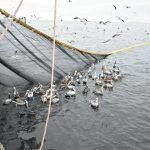 Una buena noticia en el Día Mundial de los Océanos: ATF-CODEFF reconocido en premios Latinoamérica Verde 2018